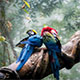 Birds on branch in Amazon rainforest